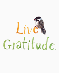 quote on gratitude beautiful gratitude quotes daily morning ness crafty