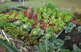 simple backyard vegetable garden soil condition how to start a