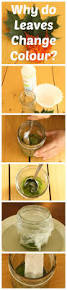 science experiments for kids why do leaves change color simple