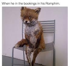 Taxidermy Fox Meme - bad taxidermy romphim know your meme