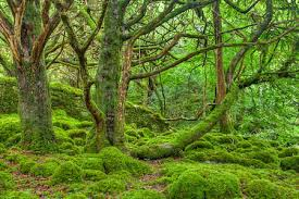 survival myth moss only grows on the side of a tree