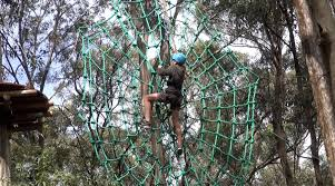 sydney the hills treetops sydney tree top adventure park newcastle for kids activities and reviews