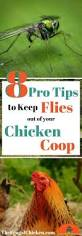 Backyard Chickens Magazine 15 Plants To Grow That Will Lower Your Chicken Feed Bill