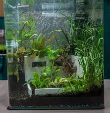 Small Tank Aquascaping Aquascaping Live Contest Returns To Aquatic Experience