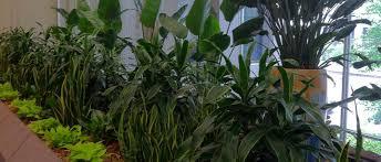 Beautiful Indoor Plants Kansas City Greenery Kansas City Greenerykansas City Greenery