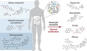 chemical transformation of xenobiotics by the human gut microbiota