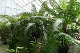 seed collection of australian native plants uc berkeley botanical garden evolution of plants