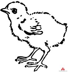 chicken animals clipart gallery free downloads by animals clipart