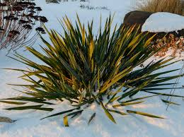 creating winter interest in the garden with evergreen perennials