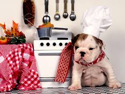 chien cuisine even the littlest dogs can help in the kitchen just sure a
