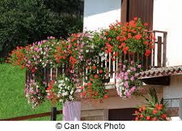 geranien balkon stockfoto töpfe groß 3 geranien blühen blühen balkon