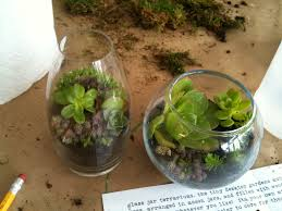 terrarium containers class project with terrarium glass jars