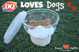 dairy queen loves dogs kama loves agility