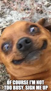 Overwhelmed Memes - overwhelmed dog imgflip