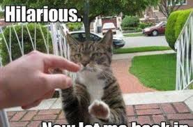 Funny Animals Meme - funny animals archives page 2 of 3 topbestpics com