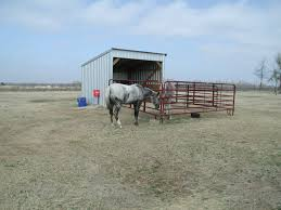 barn design boarding paddocks with joint run in shelters horse