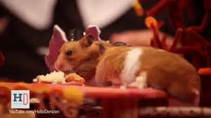 thanksgiving hamster gif find on giphy