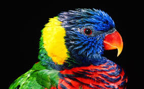 bird hd photos download