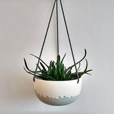 best hanging plant terrarium products on wanelo