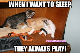 Funny Kitten Memes - this is how brothers are funny kitten meme