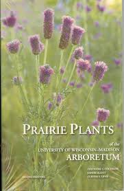 austin native plants 36 best plants for austin images on pinterest native plants