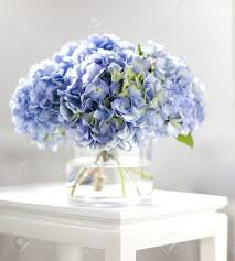 hydrangea bouquet hydrangea bouquet stock photo picture and royalty free image