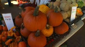 Shawns Pumpkin Patch Los Angeles Ca by Best Pumpkin Patches In Minnesota Wcco Cbs Minnesota