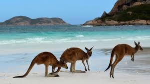 imagenes animales australia el motivo para viajar a australia animales felices vacaciones