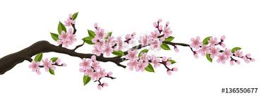 cherry tree branch with pink flower and green leaf illustration