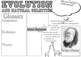 evolution and natural selection poster by katie lu teaching