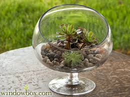 medium slanted bias terrarium bowl terrariums container