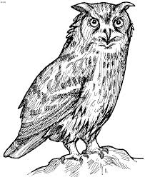 owl coloring pages free printables tthe huns yellow pages free