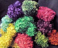 hydrangeas flowers preserved hydrangea flower bunches
