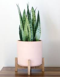 best 25 indoor planters ideas on pinterest indoor green plants