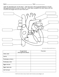 circulatory system diagram worksheet anatomy body charts