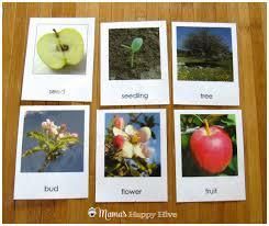 montessori tree printable diy felt apple life cycle with free printable apple and tree