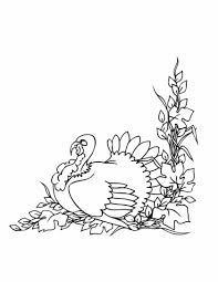 thanksgiving turkey color free printable turkey coloring pages for kids animal place