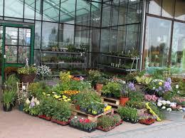 balkon und terrassenpflanzen balkonpflanzen terrassenpflanzen gärtnerei denecke bautzen