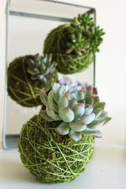 212 best succulents and cacti gardening images on pinterest