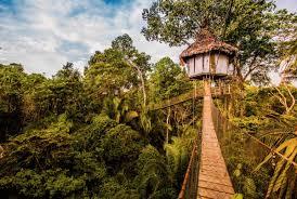 stylish tree house in jungle best house design amazing tree