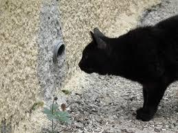 Barn Cat Names 25 Killer Cat Names For Female Cats Pethelpful