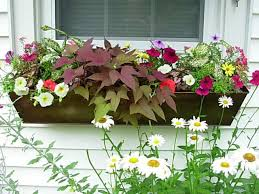 Metal Window Boxes For Plants - window box contest entry metal window box under window window