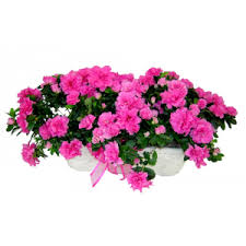 funeral plants sympathy funeral plants san luis obispo ca florist albert s