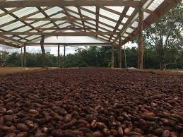 bean sourcing dandelion chocolate