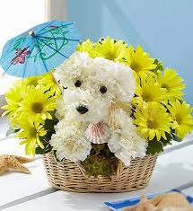 dog flower arrangement click here for alternate products doggie paddle surf s up for