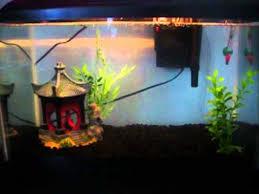 Asian Themed Fish Tank Decorations 10 Gallon Fish Tank Asian Decoration Youtube