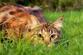 keep feral cats out of your yard safely and easily