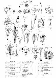 nz native plants list native flowers of new zealand anatomical drawings wikisource