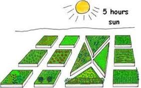 most interesting how to design a vegetable garden layout 4x12