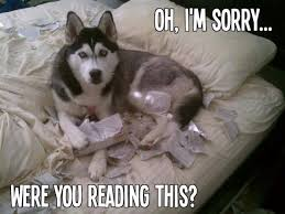 Im Sorry Memes - im sorry dog meme